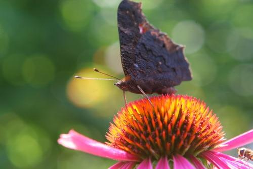 Schmetterlingssaison