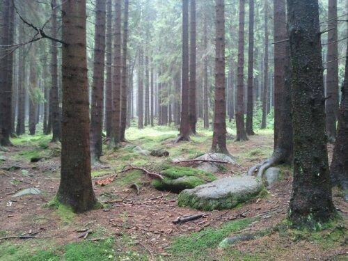 Heute Harz